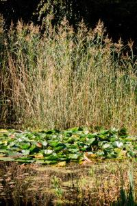 Ramselhof-Garten-Teich